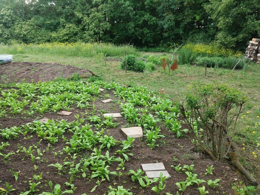 Garten Permakultur